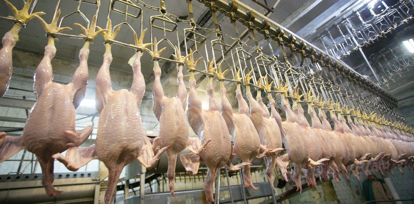 frozen chicken exporters